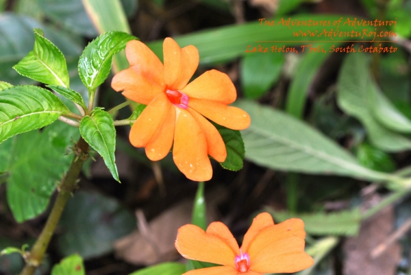 Lake Holon Flower