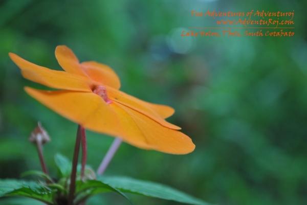 Philippine Flower