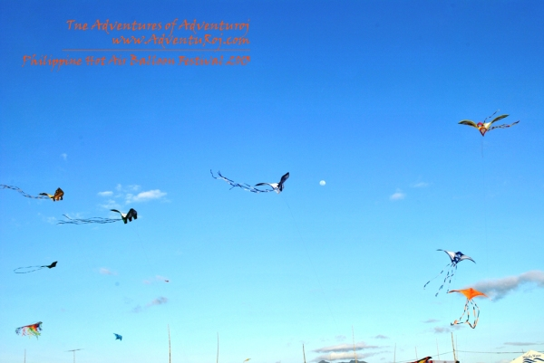 Kite Flying Exhibition (1)