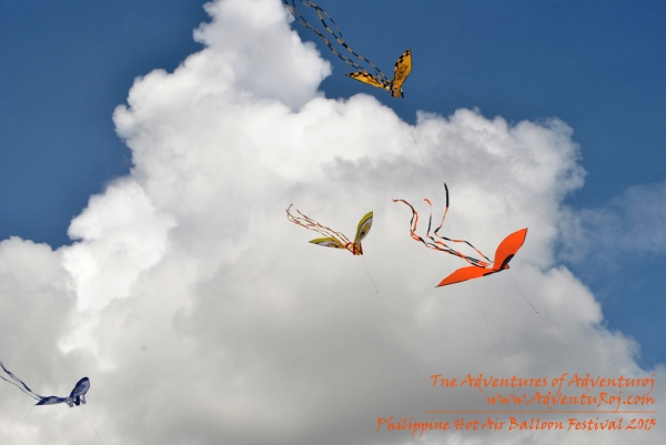 Kite Flying Exhibition (6)