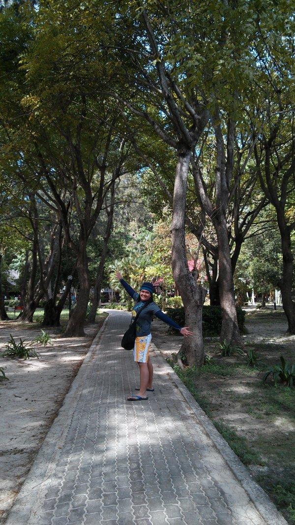 Manukan Pine Trees