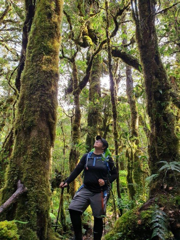 mt kalatungan mossy forest